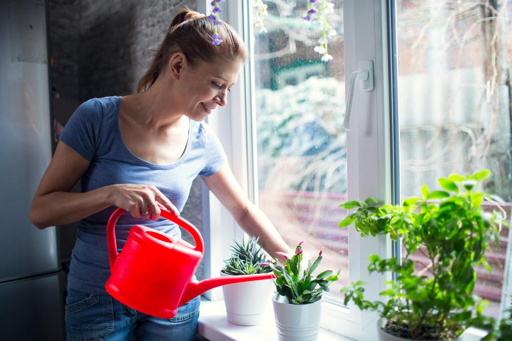 Cele mai bune plante care te ajuta sa ai un aer curat acasa