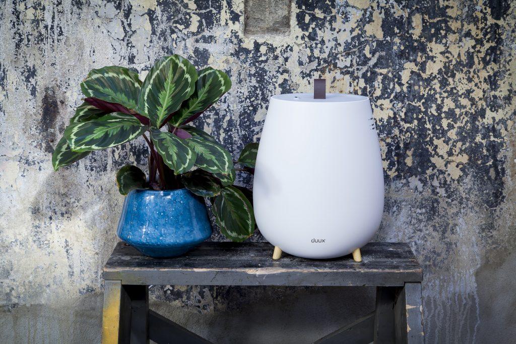 Ce efecte nocive are aerul uscat si cum mentii umiditatea ideala a casei